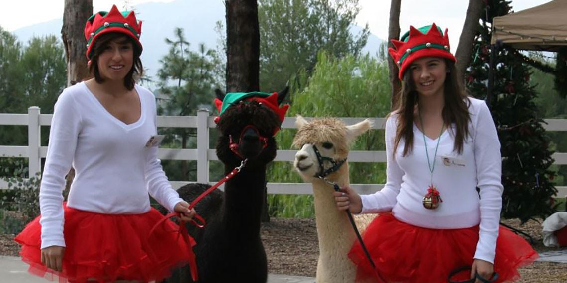 Alpaca Hacienda Holiday Open Ranch Day