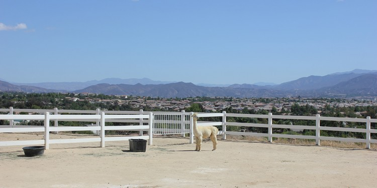 Another great view from The Alpaca Hacienda