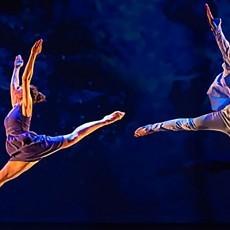 Avocado Dance Theatre 2015