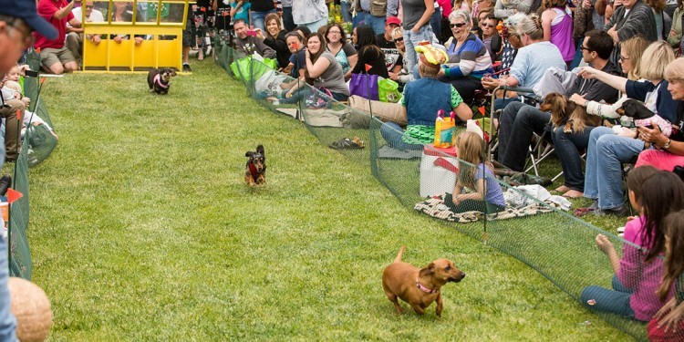 Spend a Day at the Races with Wiener Fest 2015
