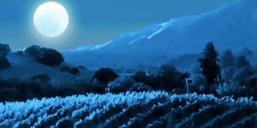 Full Moon Run Benefits Temecula Theater Foundation