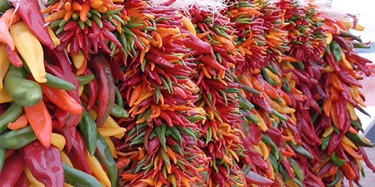 Bundle of chile peppers